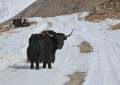 Kirghizistan (28)